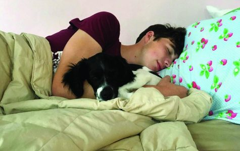 Students comforted, inspired by their pets