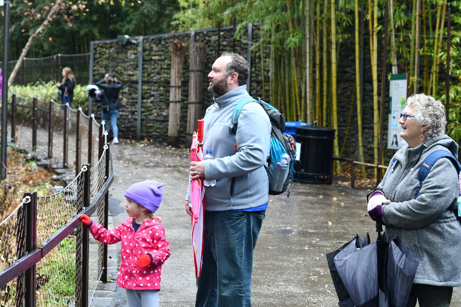 EX-ZOO-BERATING. Three visitors stare at pandas in the enclosure. The girl enjoys frequent visits to the zoo with her grandparents.