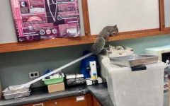 A squirrel enters a science classroom on Sept. 21.