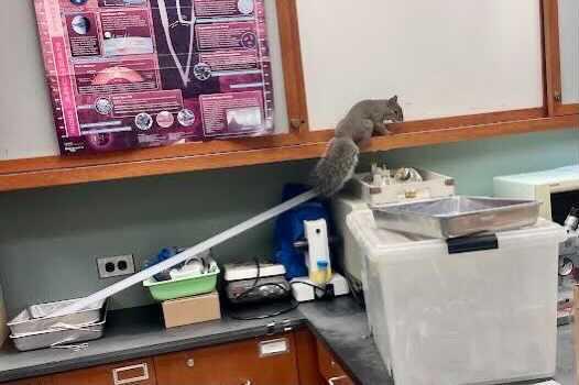 Squirrels found around U-High